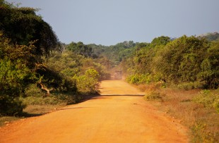 TRACK THROUGH YALA NATIONAL PARK copy