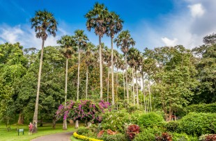DAY 11 Botanical gardens in Peradeniya, Kandy