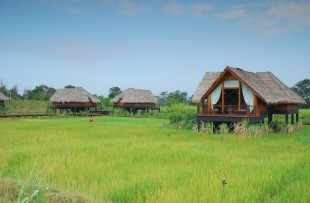 Dwellings Over Paddy copy