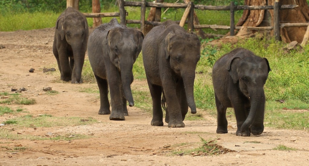 THE ELEPHANT TRANSIT HOME NEAR UDA WALAWE NATIONAL PARK copy